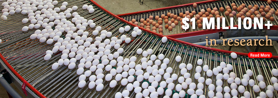 Eggs in processing plant