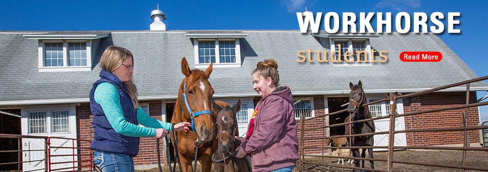Students help at horse barn
