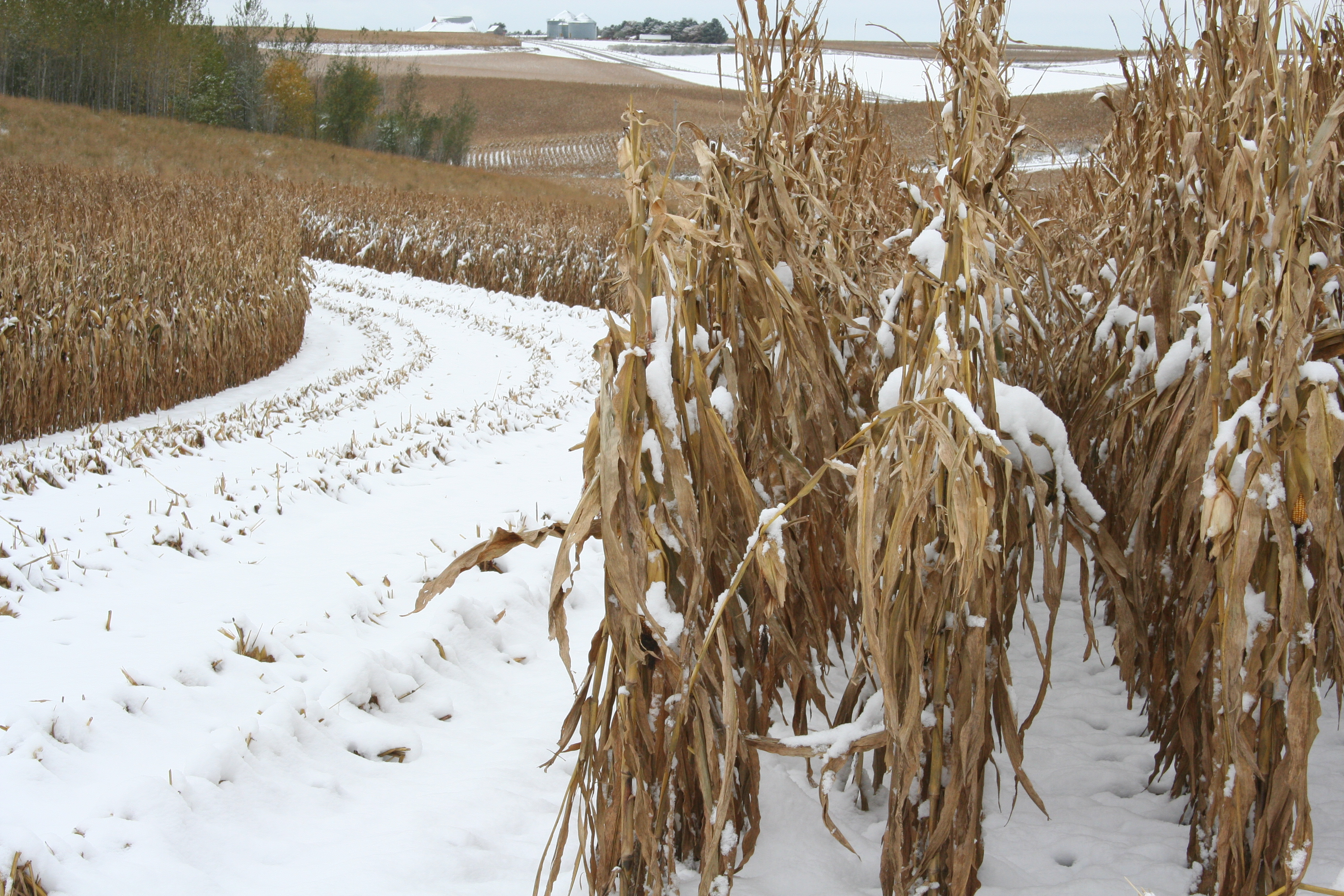 Armstrong State University >> Early snow falls on research farm   College of Agriculture and Life Sciences