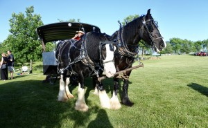 Guests at the Stars Over Sunrise Acres event could enjoy a horse drawn carriage ride through the meadow.