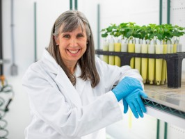 Gwyn Beattie in lab with soybean plants