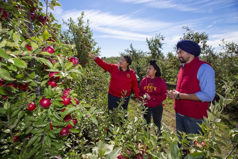 Angela Shaw with colleagues in apple orchard