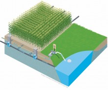Illustration showing drainage water recycling system using subirrigation through drainage tile.