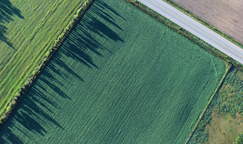 crops aerial view