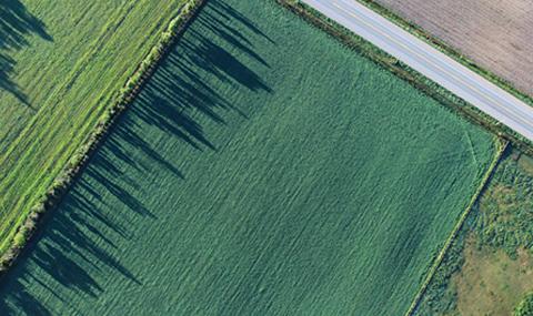 crops aerial view