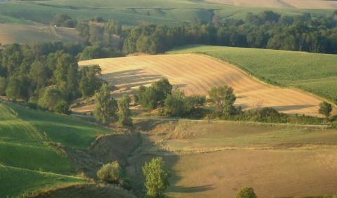 lowa farmland