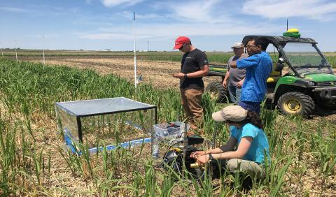 Dr. Ashley Keiser and others labeling Miscanthus giganteus (Freedom) with 13C-enriched CO2.