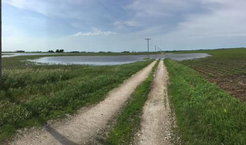 Pothole wetland in a field