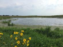 wetland with yellow flowers in foreground